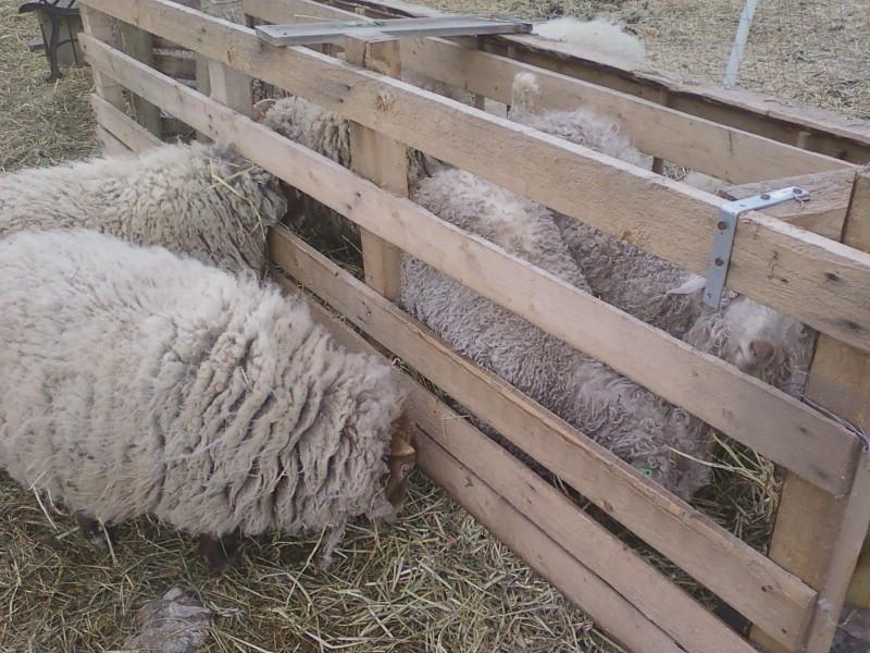 goat-crib2