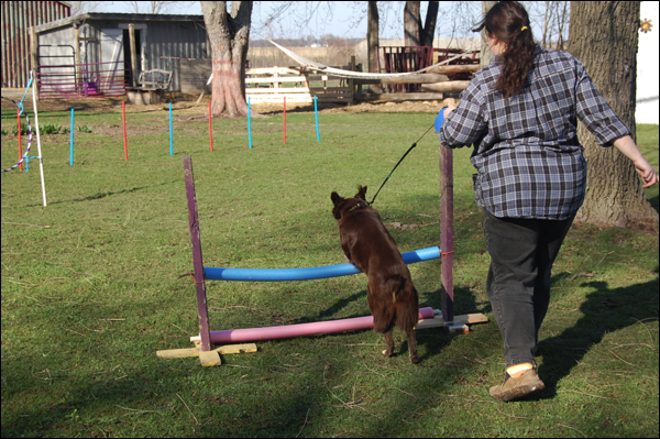 Homemade Dog Agility Course The Mobile Home Woman