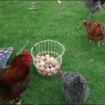 Hmmmmm.... eggs!
