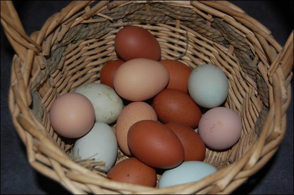 DSC_eggs0831